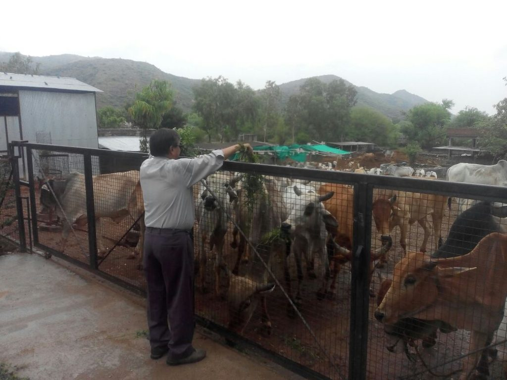 PKP Animal shelter udaipur
